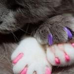 Антицарапки для кошек.Инструкция по применению антицарапок