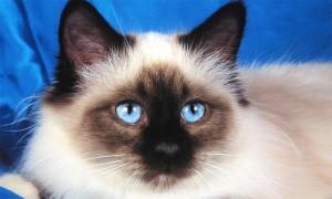 Еще один кот