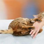 Как отучить кошку кусаться и царапаться