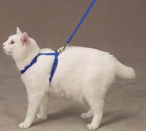 Как правильно одевать на кота поводок