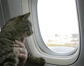 Как правильно перевозить кошек в самолете