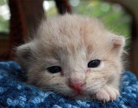 Чем кормить новорожденных котят без кошки