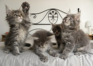 Игривые котята