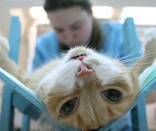 Мазок у кошки