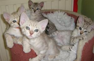 Дружные котята