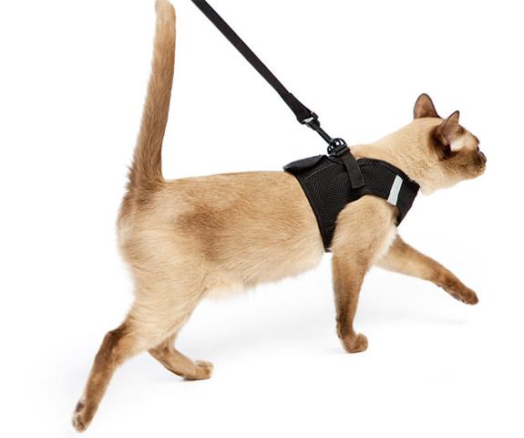 Как сделать кошачий поводок