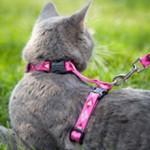 Шлейка для кошки: как правильно одевать и что нужно знать