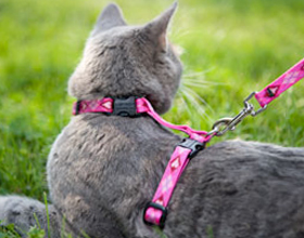 Схема как надевать шлейку на кошку