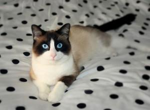 Сноу Шу на кровати