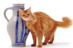 Сомалийский кот и ваза