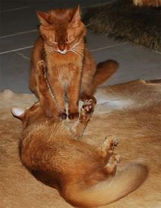Кот и кошка играют