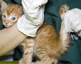 Как правильно измерить температуру у кошки