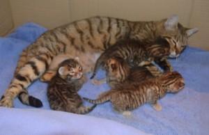 Мама с котятами