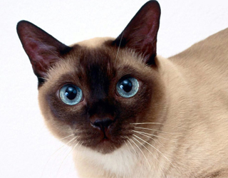 Взгляд кошки