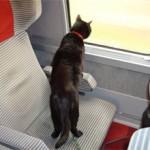 Как правильно перевезти кошку в поезде