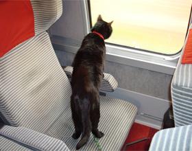 Кот в поездах дальнего следования