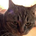 Можно ли кошкам давать валерьянку и почему они ее любят