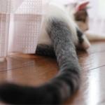 Как определить поведение кошек по хвосту