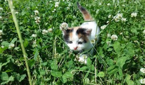 Котенок бегает на природе