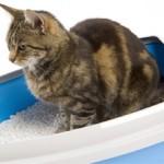 Как выбрать хороший наполнитель для кошачьих туалетов