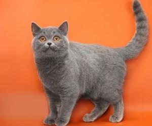 Кот на оранжевом фоне