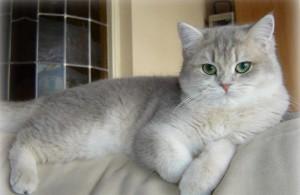 Светлая кошка
