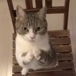 Как понять чего хочет кошка