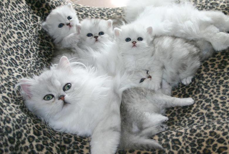 Кошка с детьми