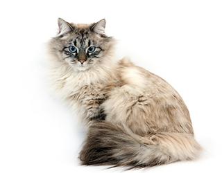 Кошечка сидит