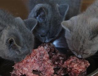 Котята и мясо
