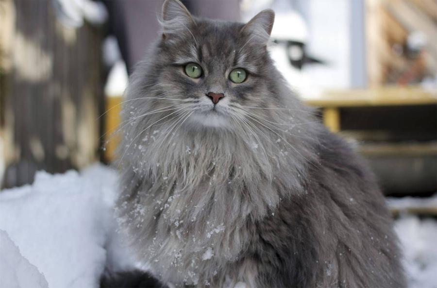 Фото мудрый кот