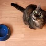Каким должно быть питание кошки после родов