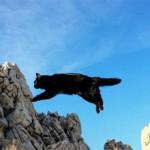 Что делать если кошка упала с высоты