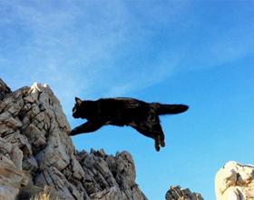 Если кошка упала с высоты