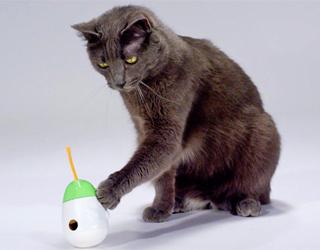 Кошка играет