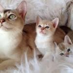 Как правильно играть с кошками и котятами
