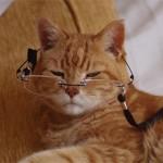 Если кошка стареет — как за ней правильно ухаживать