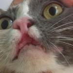 Ринит у кошек – симптомы и лечение