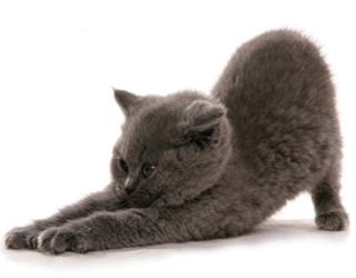 Котенок растянулся