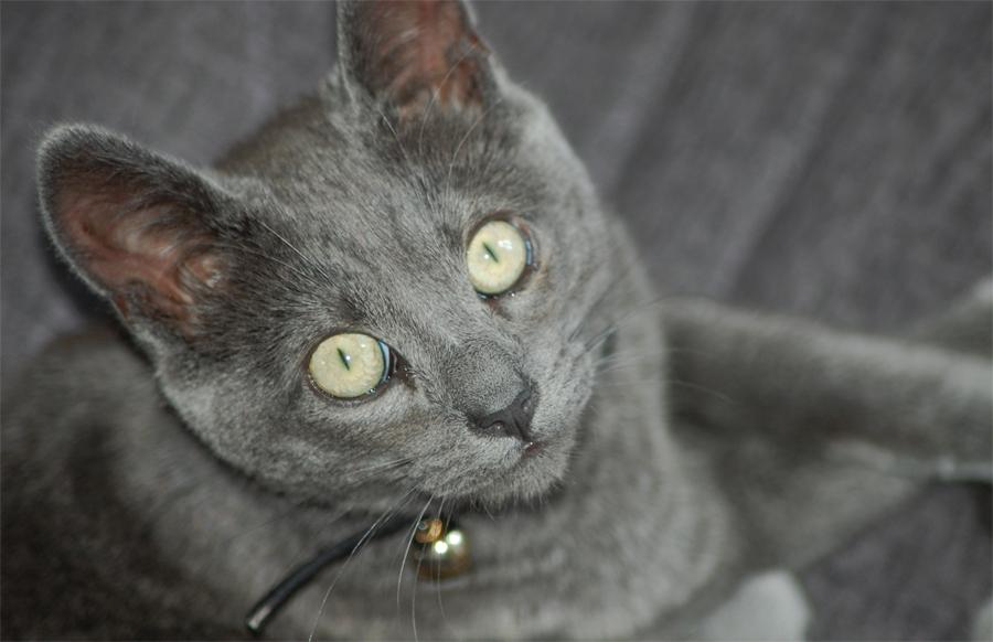Фото кота карат