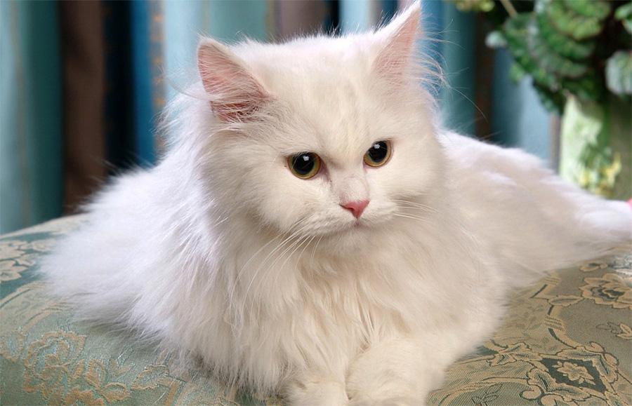 С кошки шерсть летит клочками. Что делать?