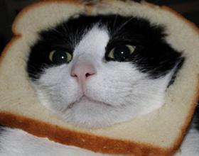 Хлеб кошкам