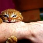 Почему кот кусается когда его гладишь?