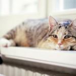 Кот дрожит когда лежит — причины и нужно ли беспокоиться
