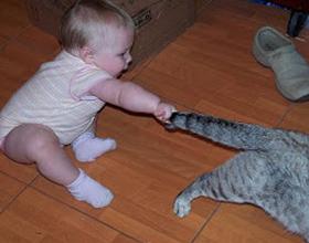 Почему нельзя дергать кота за хвост