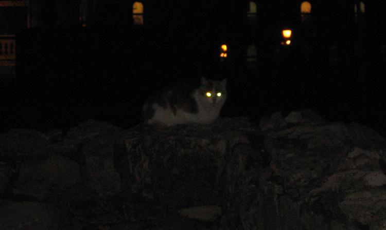Кот в ночи