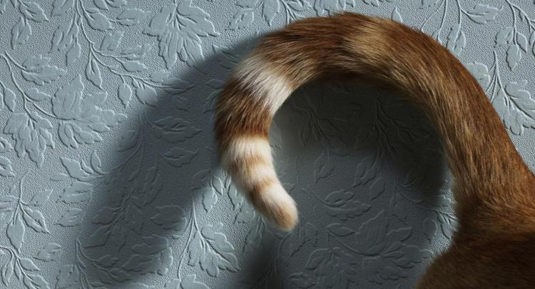 Жирная шерсть на хвосте у кота