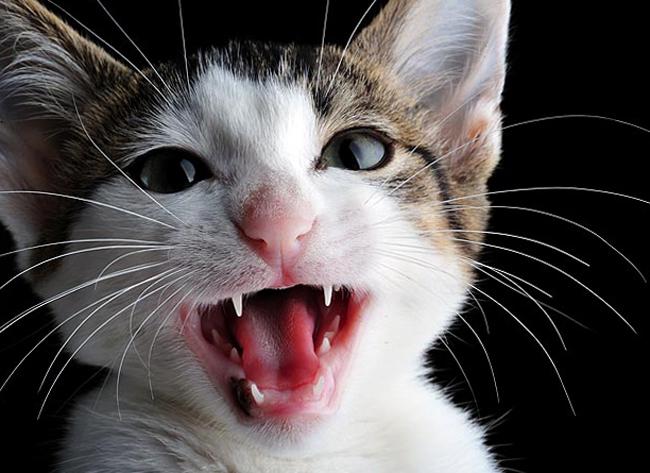 Слышать что делать кот