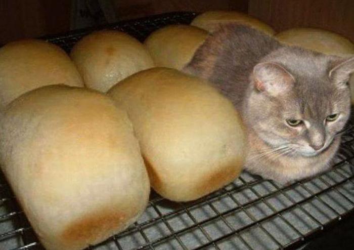 Кот среди хлеба