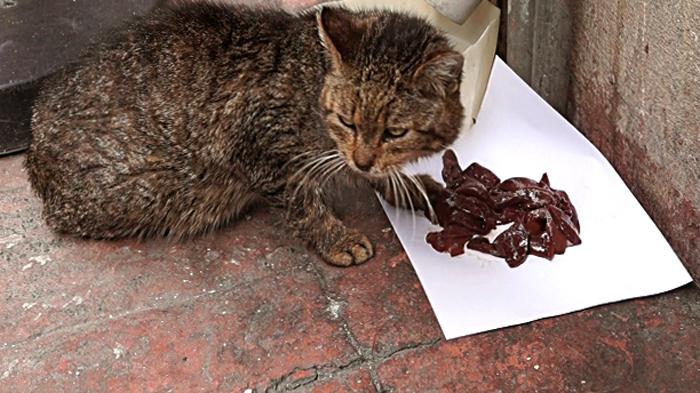 Кот кушает печень
